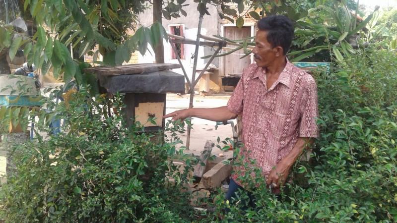 Penghasilan Sampingan dari Ternak Lebah Trigona