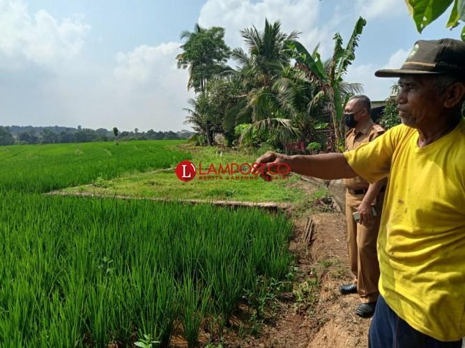 Penutupan Saluran Irigasi Ancam 500 Hektare Sawah di Metro