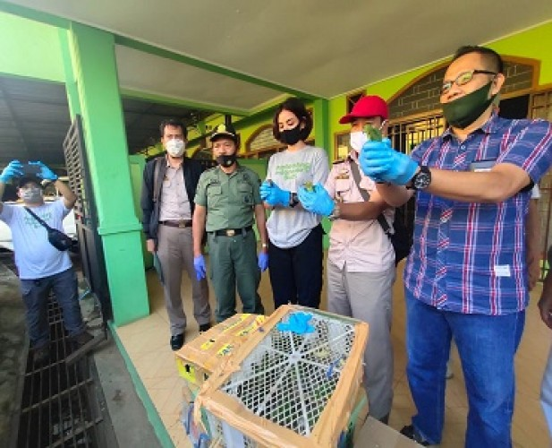 Penyelundupan 1.545 Burung lewat Jasa <i>Travel</i> Digagalkan di Bakauheni