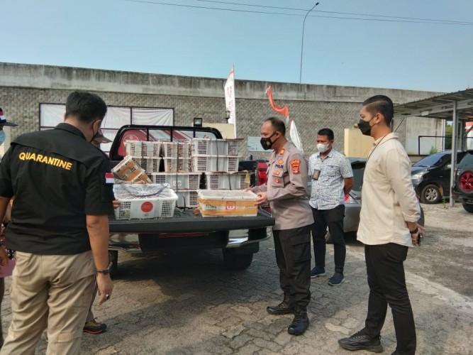 Penyelundupan 1.639 Ekor Burung Liar Digagalkan Polsek Bakauheni