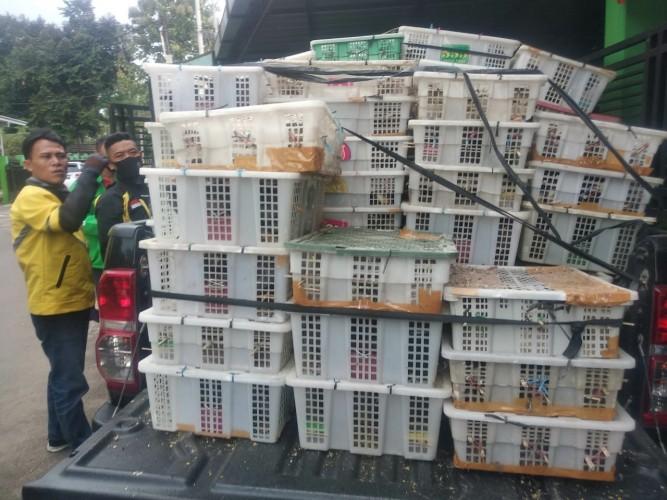 Penyelundupan 2.400 Burung tanpa Dokumen Digagalkan Petugas