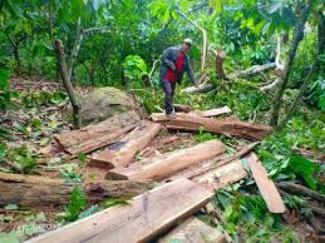 Penyelundupan 25 Batang Kayu Sonokeling Ilegal Digagalkan