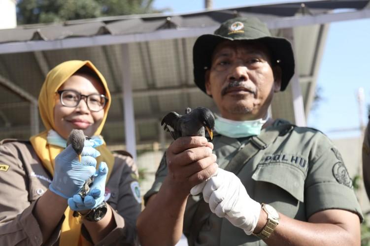 Penyelundupan 3.092 Burung Berhasil Digagalkan