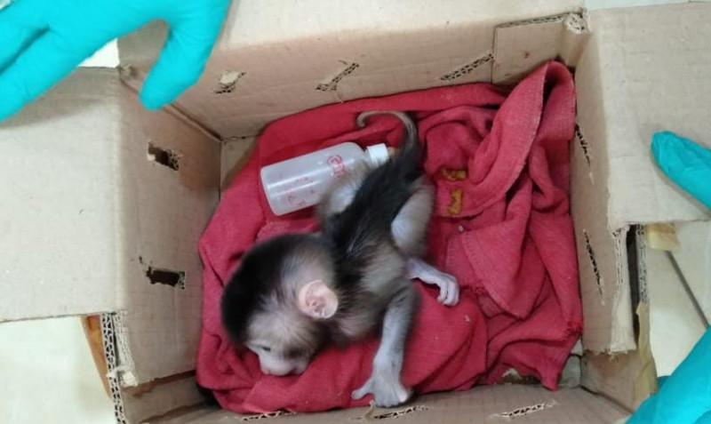 Penyelundupan Belasan Ekor Monyet Lampung ke Jakarta Digagalkan