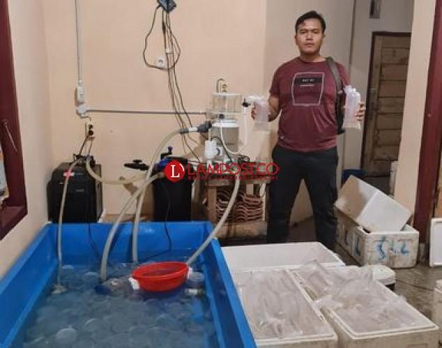 Penyelundupan Benih Lobster Senilai Rp9,3 Miliar Digagalkan di Pesisir Barat