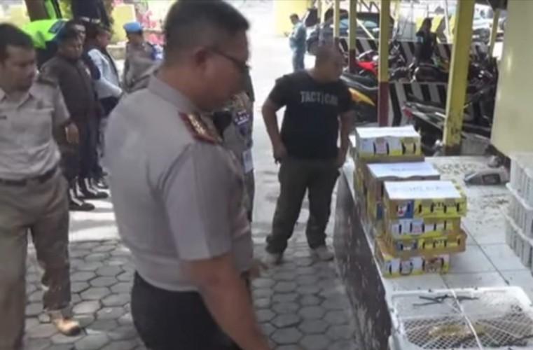 Penyelundupan Seribuan Burung Langka Asal Jambi Digagalkan