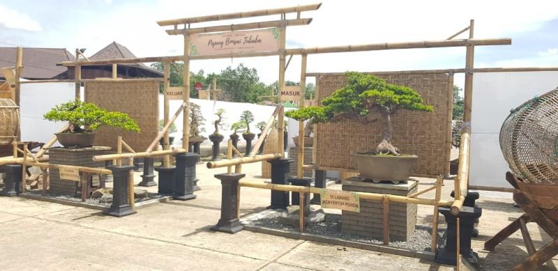 Pepung Bonsai Tubaba Diminati Luar Provinsi