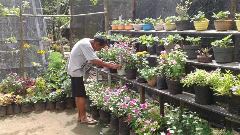 Percantik Pekarangan Rumah dengan Tanaman Hias Herbal