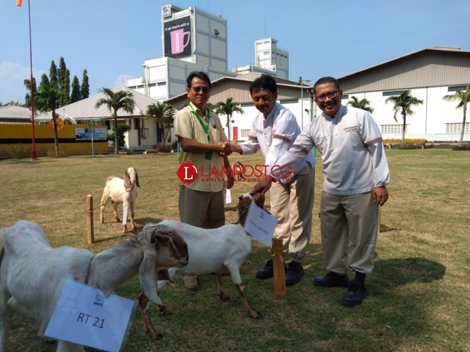 Pererat Silaturahmi, Nestle Bagikan 20 Kambing Kurban