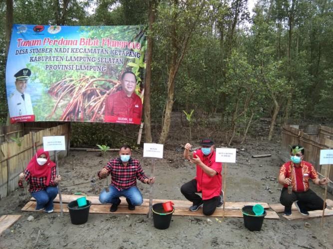 Peringati HUT ke-48, Kader PDI Perjuangan Lamsel Tanam Mangrove