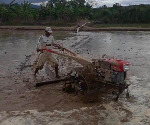 Perlu Irigasi, Petani Di Suoh cuma Bisa Mengandalkan Hujan