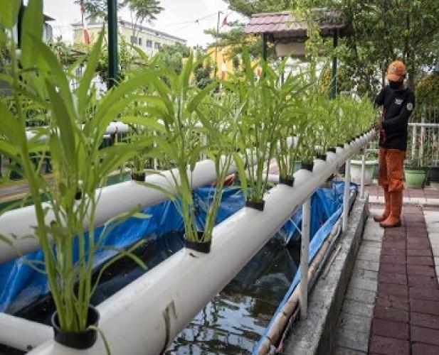 Pertanian Diprediksi Memiliki Masa Depan Cerah