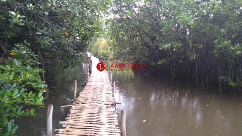 Pesona Tracking Wisata Hutan Mangrove di Desa Tarahan