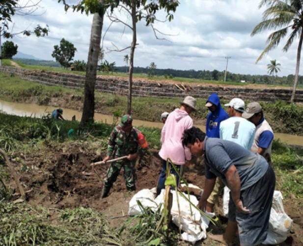 Petani Bersama Babinsa Timbun Tanggul dengan Karung Berisi Tanah