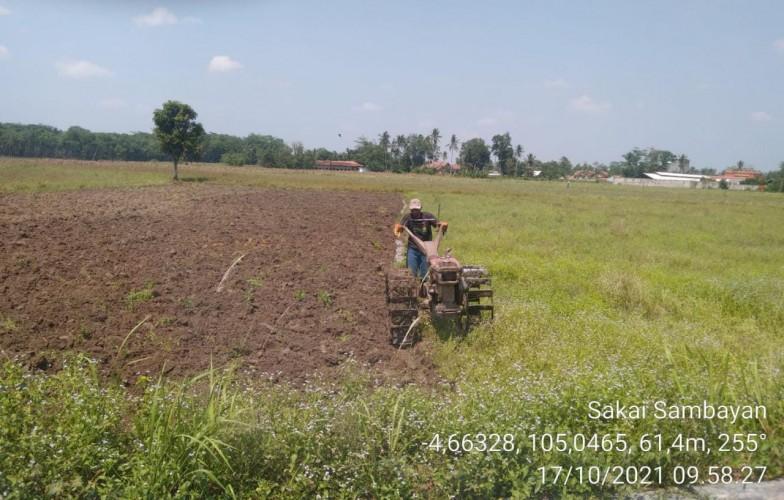 Petani di Tubaba Olah Lahan Persiapan Musim Tanam Rendeng
