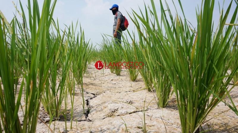 Petani Harapkan Sumur Bor dari Dana Desa