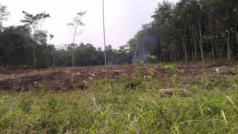 Petani Karet di LampuraBeralih ke Palawija