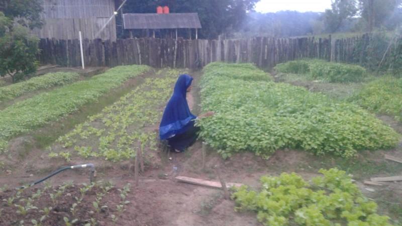 Petani Keluhkan Anjloknya Harga Sayur di Lampura
