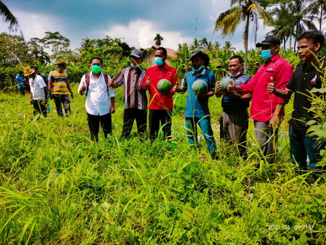 Petani Lamsel Didorong Tanam Semangka dan Melon