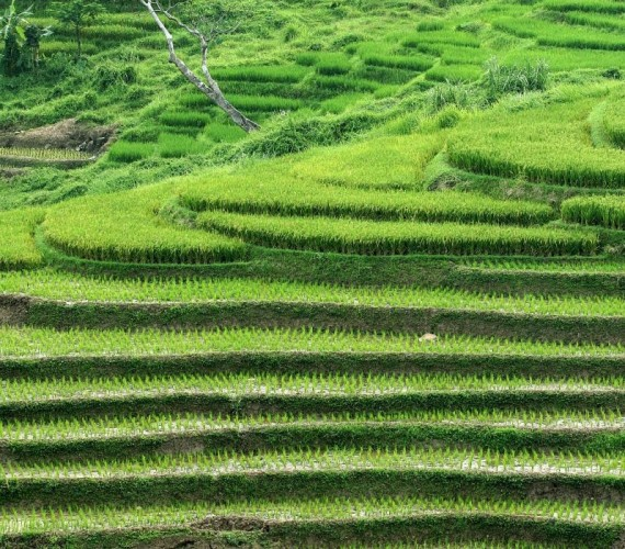 Petani Suoh Berharap Hujan Datang untuk Memenuhi Kebutuhan Tanamannya