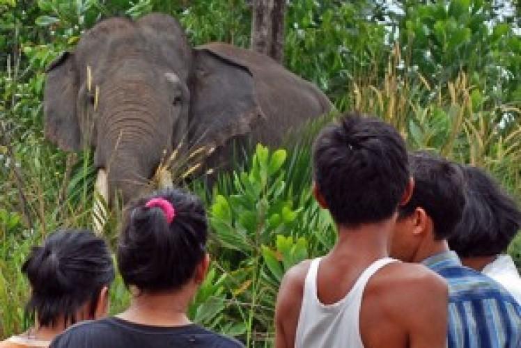 Petugas Awasi Pergerakan Gajah Yang Masih Bertahan