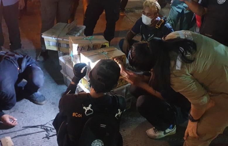 Petugas Gabungan Gagalkan Penyelundupan Ribuan Satwa Ilegal di Bakauheni