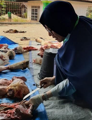 Petugas Keswan Temukan Hati Sapi Bercacing pada Hewan Kurban di Pringsewu