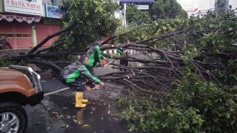 Pohon Cempaka Tumbang di Jalan Raden Inten