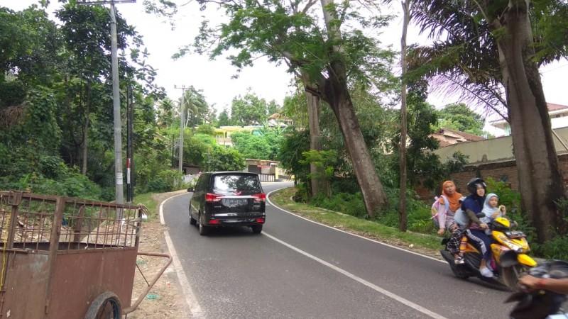 Pohon Rawan Tumbang di Jalan Sam Ratulangi akan Disurvei