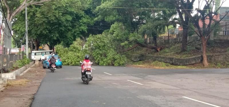 Pohon Roboh di Perkantoran Pemkab Lamsel Tutupi Jalan