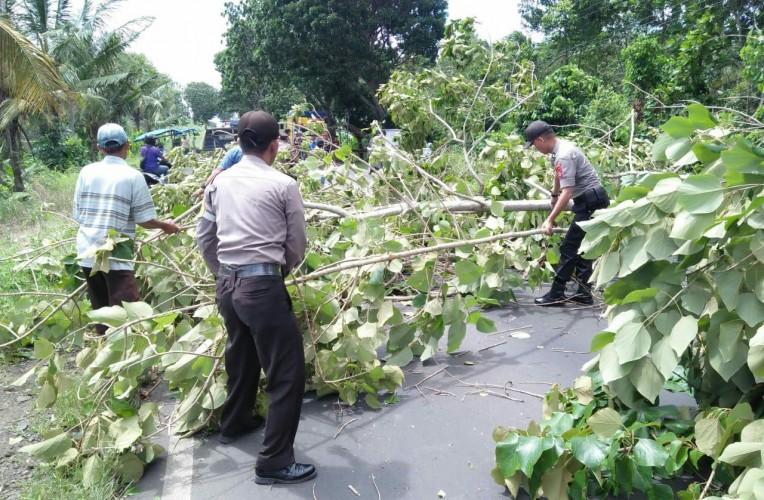 Pohon Tumbang di Jalinsum Penengahan