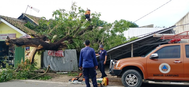 Pohon Tumbang Hantam Bengkel dan Rumah Warga