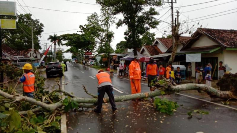 Pohon Tumbang Lukai 2 Warga Metro