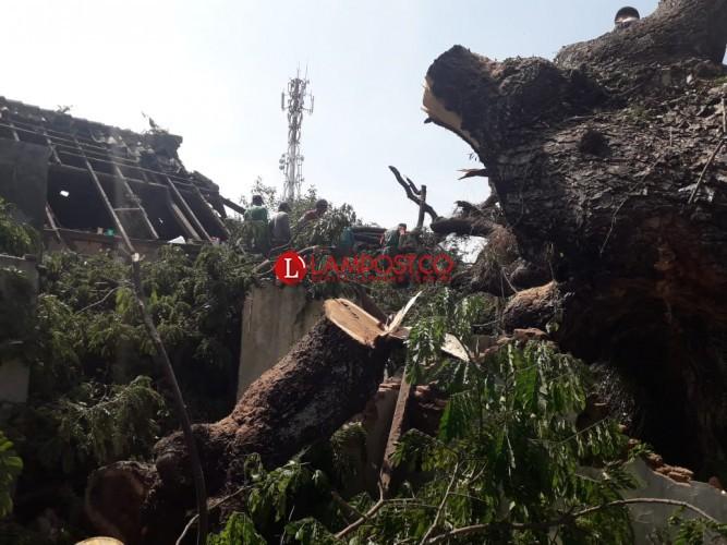 Pohon Tumbang Timpa 8 Rumah, Warga Diminta Mengungsi