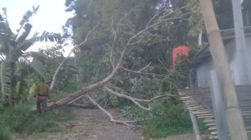 Pohon Tumbang Timpa Fasilitas Huntara di Waimuli Timur