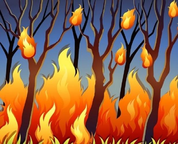 Polda Riau Selidiki Kebakaran Lahan Gambut di Pelawan