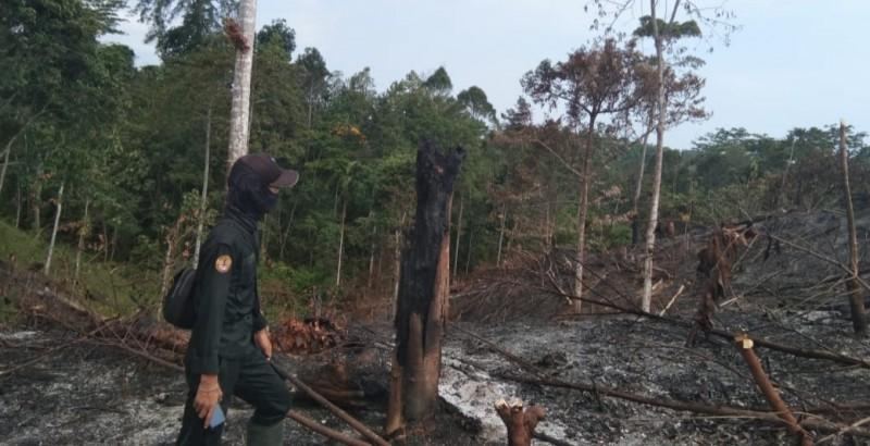 Polhut TNBBS Amankan Pelaku Pembakaran Hutan Lindung