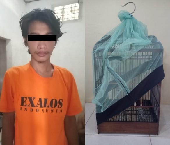 Polisi Bekuk Pencuri Burungdi Kampung Sumber Batu