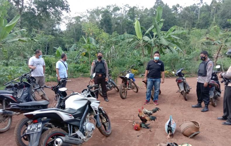 Polisi Gerebek Judi Sabung Ayam di Kampung Bandar Agung