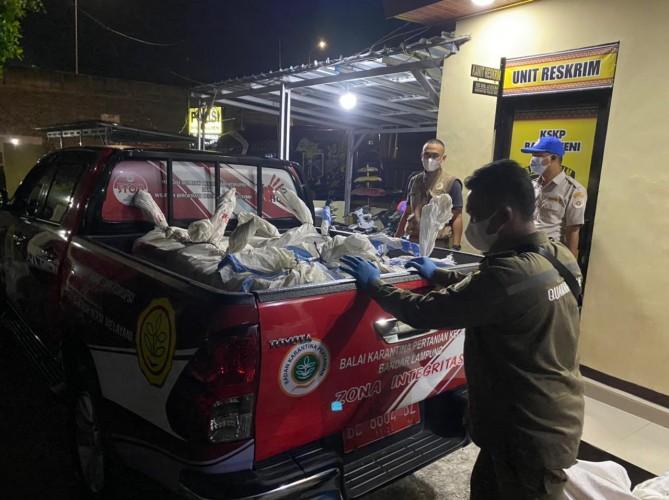 Polisi Pelabuhan dan Karantina Gagalkan Penyelundupan Daging Celeng 1,26 Ton