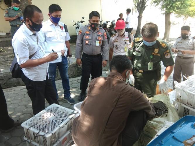 Polisi Pelabuhan Gagalkan Penyelundupan Satwa Liar