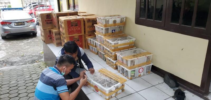 Polisi Pelabuhan Sita Ribuan Ekor Burung yang Diselundupkan ke Cilegon