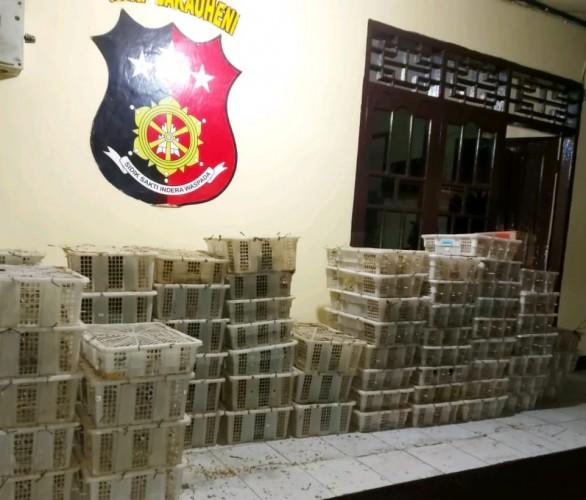 Polisi Sita Ribuan Burung Tanpa Dokumen Tujuan Brebes