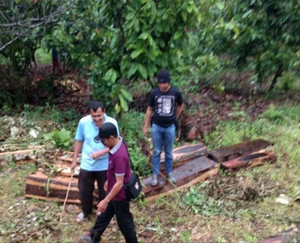 Polsek Semaka Temukan Kayu Sonokeling Diduga Hasil Illegal Loging