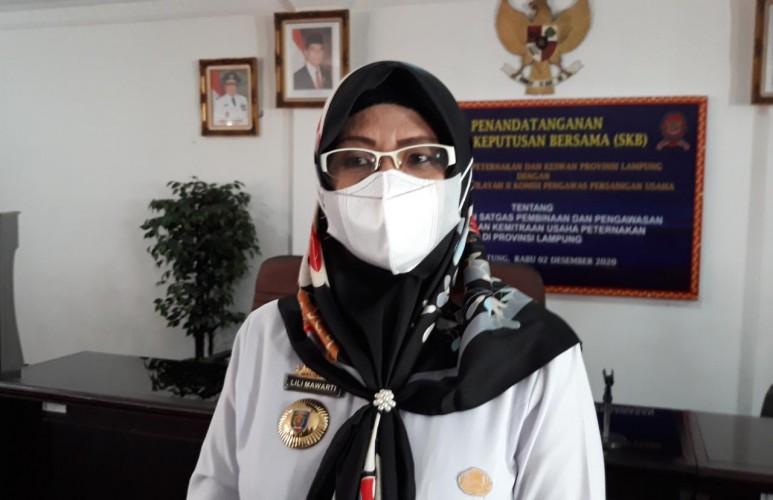 Populasi Sapi Lampung 2021 di Target 900 Ribu