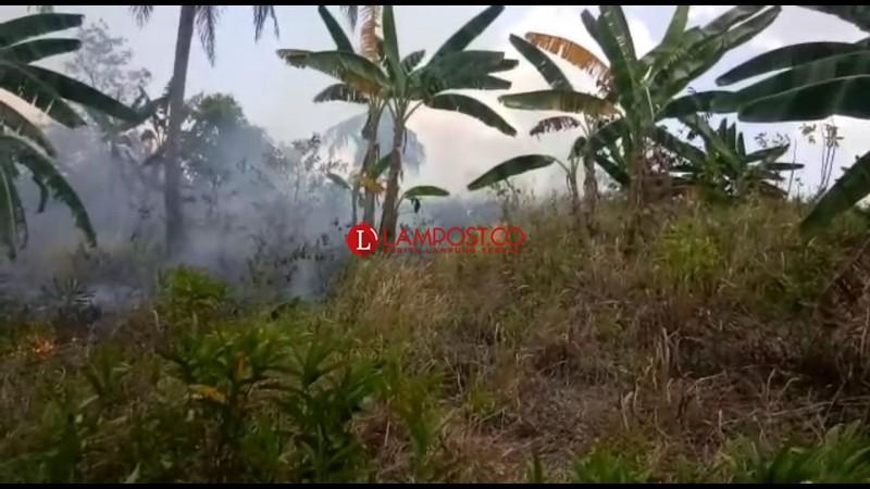 Puntung Rokok Diduga Jadi Penyebab Kebakaran Lahan di Pesawaran