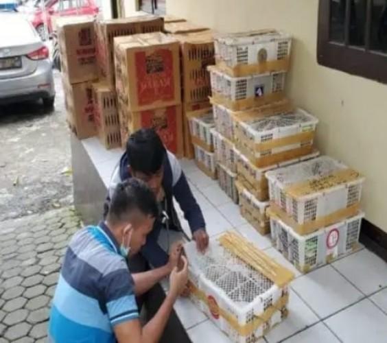 Ribuan Ekor Burung tanpa Dokumen Disita Polisi Pelabuhan