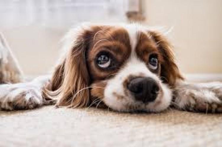 Rintihan Anjing dan Tangisan Bayi
