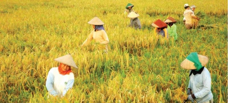 RUU yang Batasi Petani Disahkan!
