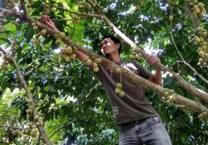 Desa Sabukempat Akan Kembangkan  Agrowisata Desa